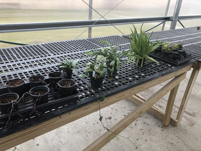 Horticulture students growing sampling and cuttings in our greenhouse.