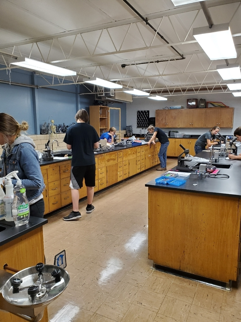Bio 2 - 8th hr - protists lab