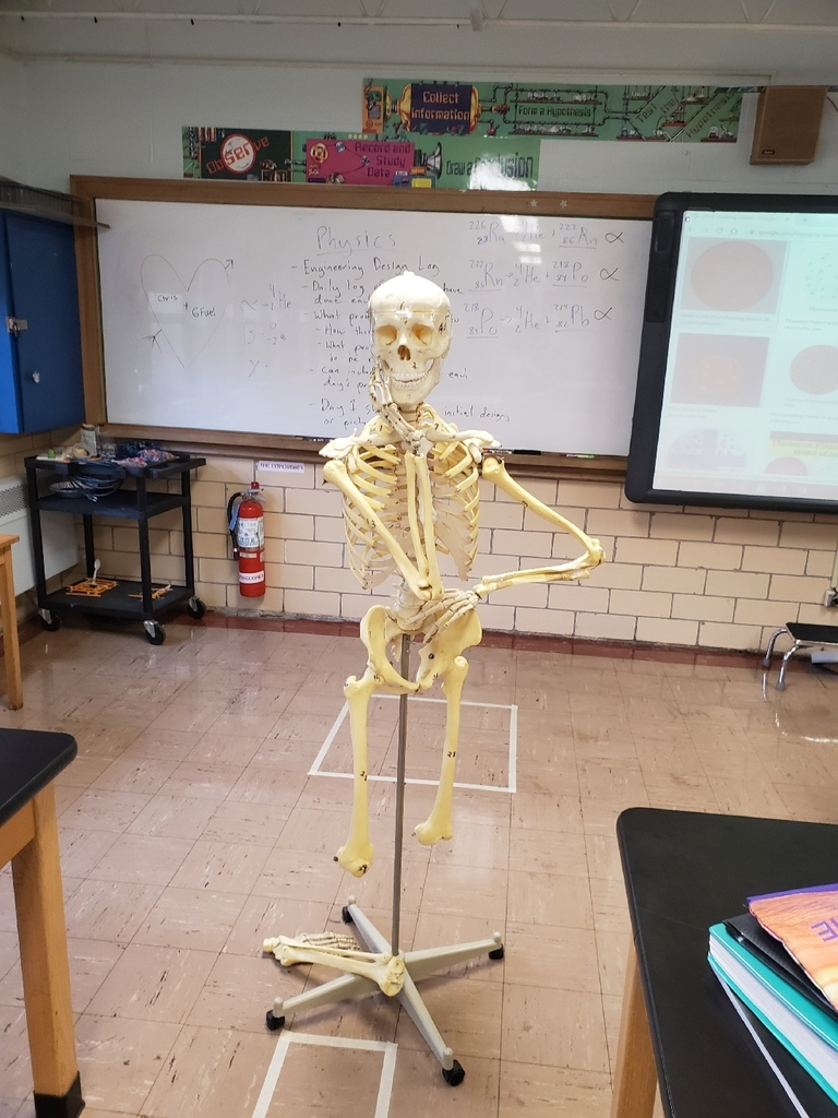 Anatomy- Skeleton Diagrams - 3rd hr